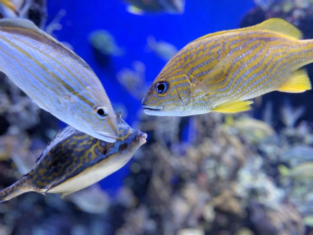 シー・アクアリウム カラフルな魚たち