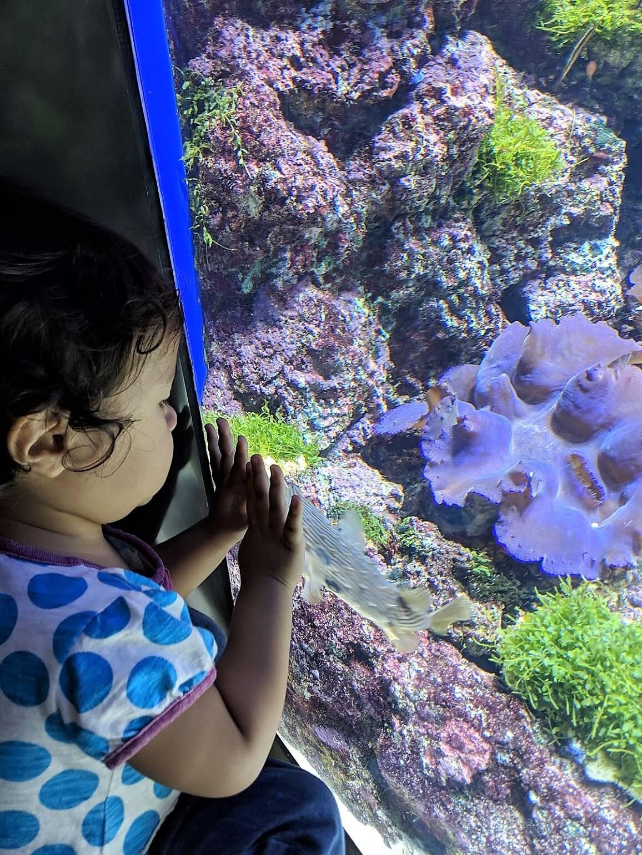 シー・アクアリウム お魚と子供