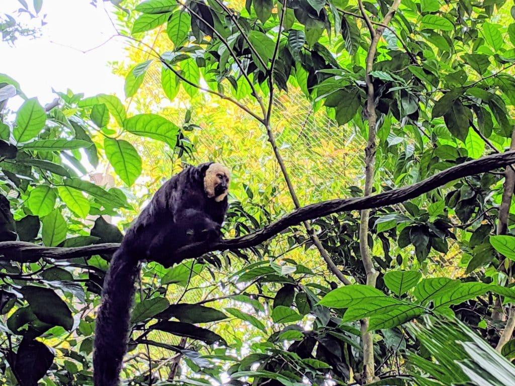 リバーサファリ リスザルの森 Squarrel Monky Forest