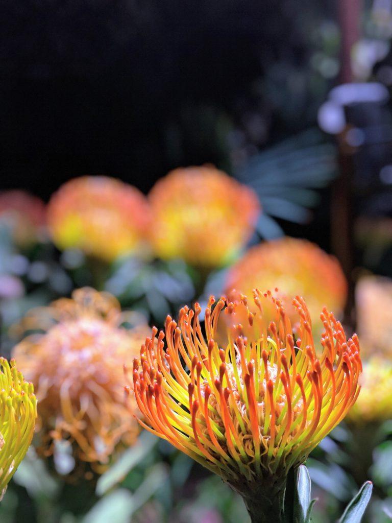 フラワードームのお花